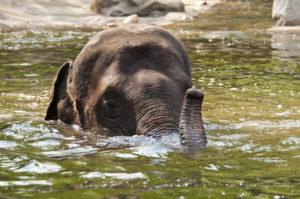 Bild eines Elefanten im Wasser