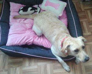 Mein Hund Stella in ihrem Körbchen mit Kissen und Plüschtier