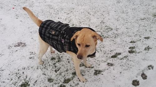 Stella mit karierter Jacke im Schnee am Bürgerpark in Köln
