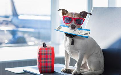 Reisen im Flugzeug mit Hund 2:</br>Der erste Flug mit Hund von Düsseldorf nach Italien