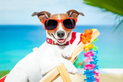 Reisen im Flugzeug mit Hund 3:</br>Der Hund im heißen Urlaubsland