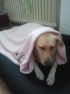 Bild von Stella unter ihrer Decke