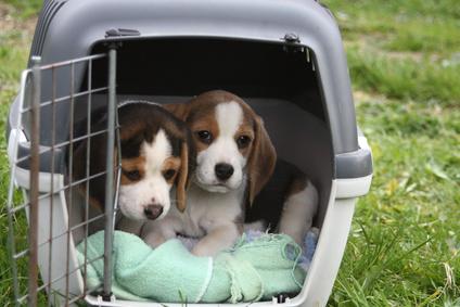 Reisen im Flugzeug mit Hund 1:</br>Informationen und Vorbereitungen für eine Reise mit Hund